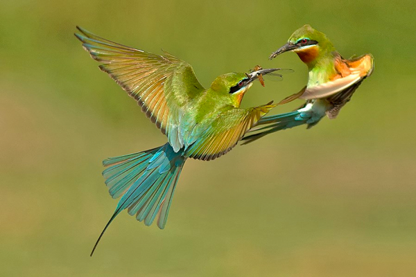 The Dawn Chorus post image on the-journal.es