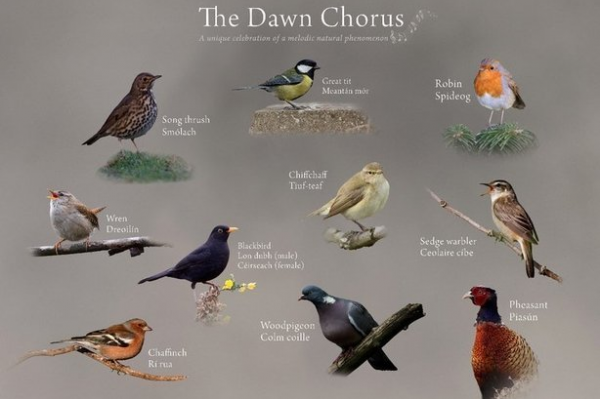 Photography Requests for the Dawn Chorus post image on the-journal.es