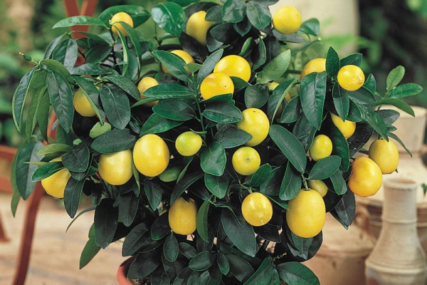 10 Best Indoor Plants and How to Care for Them image 1