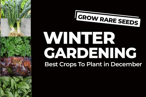 What To Sow And Grow In December image 1
